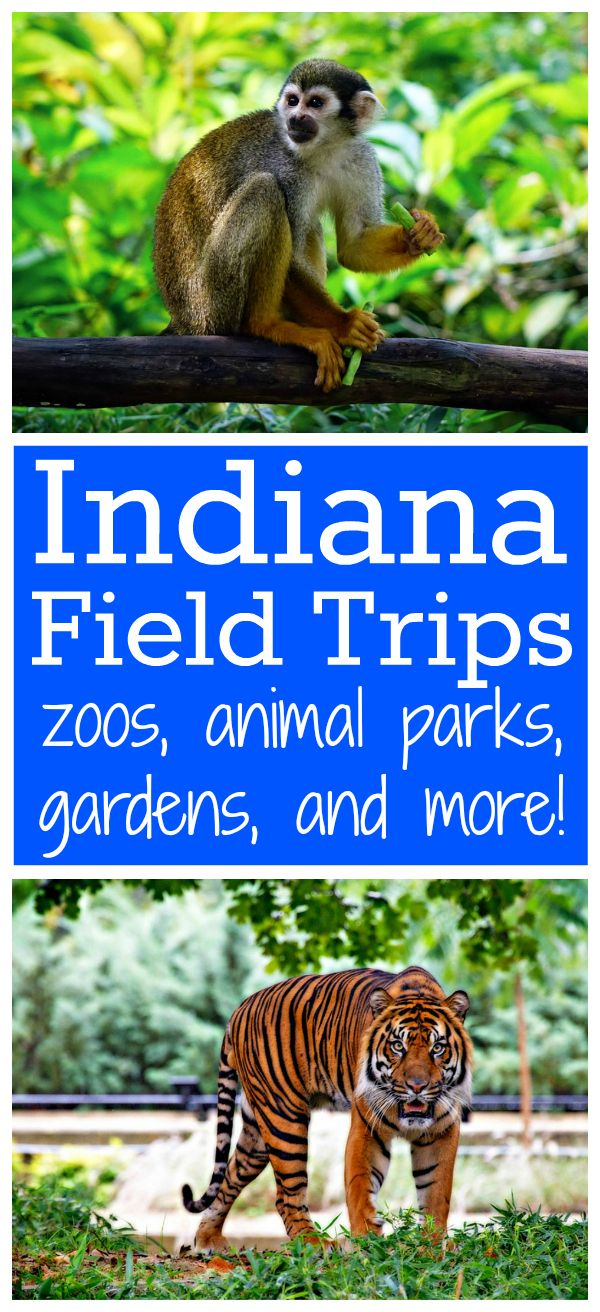Indiana Field Trips: zoos, animal parks, gardens, and other fun things to do! from Walking by the Way