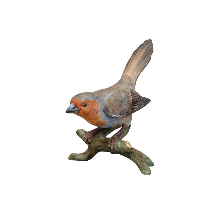 PÁSSAROS - Bullfinch Royal