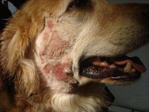 Homemade Treatment For Dog Hot Spots