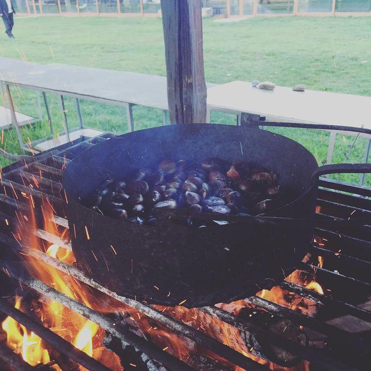 Quentes e boas! #castanhas #sãomartinho #quintadascovas #gimonde #bragança
