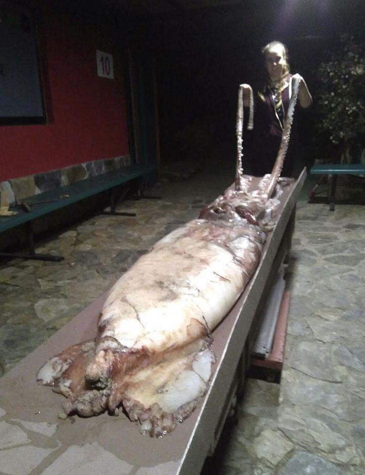 Un vecino de León fotografía un ejemplar vivo de calamar gigante en la costa de Galicia - Sociedad - Diario de León
