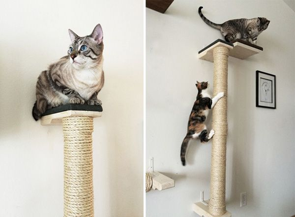 1000 images about chat cat katze habitat home on pinterest cat towers cat cave and cat - Wall mounted cat scratcher ...