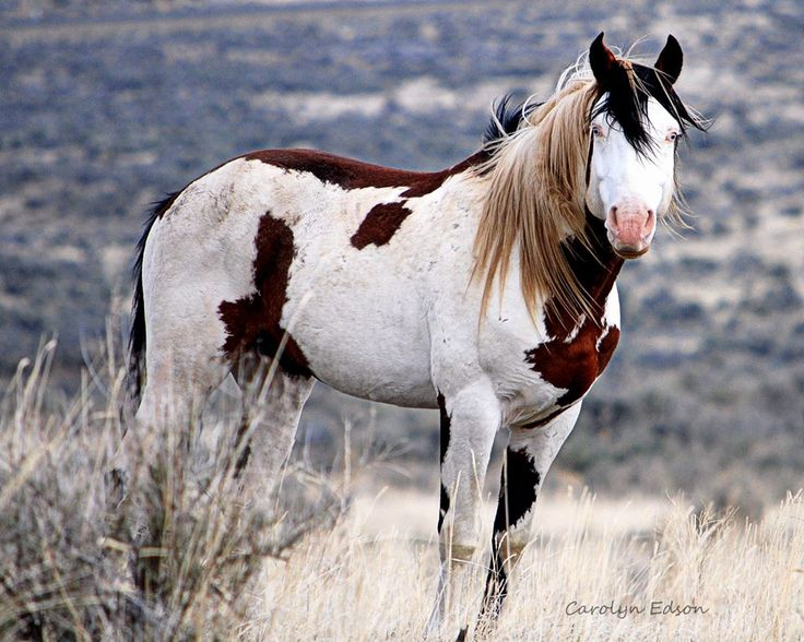 3311 best images about Wild Horses (Horses living Free) on ...