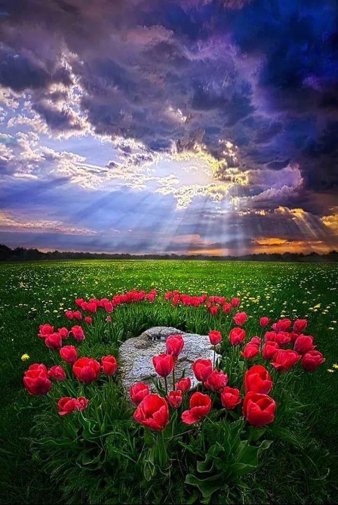AMAZING LANDSCAPE SHOT ♥♥♥ #sky sun red tulpis flowers beautiful nature