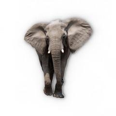 Elefant  http://www.barndekor.se/products/barnmotiv-elefant