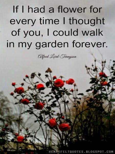 Heartfelt Quotes: If I had a flower for every time I ...