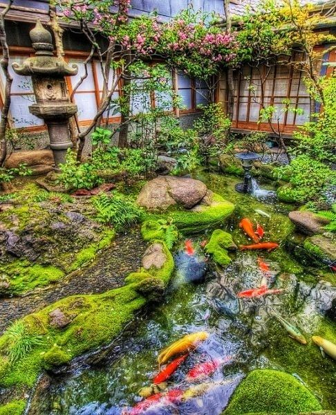 japanese garden with moss and koi pond