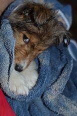 Control Dog Parasites Like Fleas, Ticks and Worms