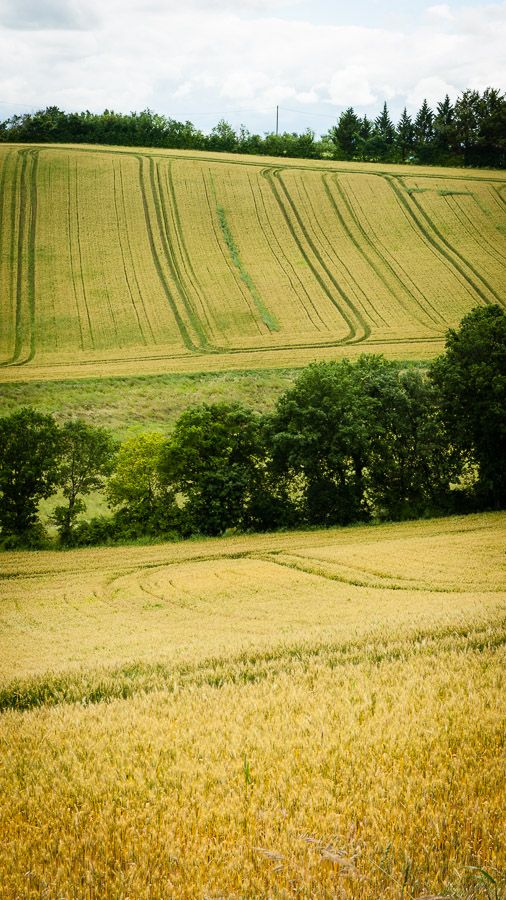 Fields of gold, Midi-Pyrenees, France