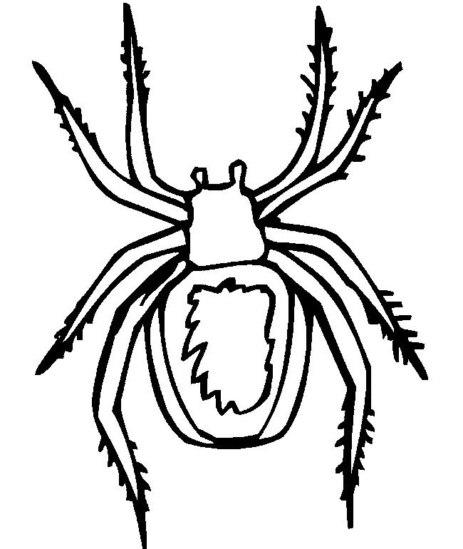 55 Crafts Colouring Pages Free Premium Templates Spider Coloring Page Blank Coloring Pages Hulk Coloring Pages