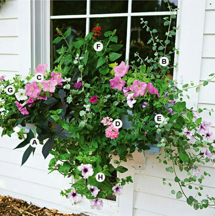 Better Homes And Garden Cottage Container Garden Pink Purple Window Box A Sweet Potato Vine
