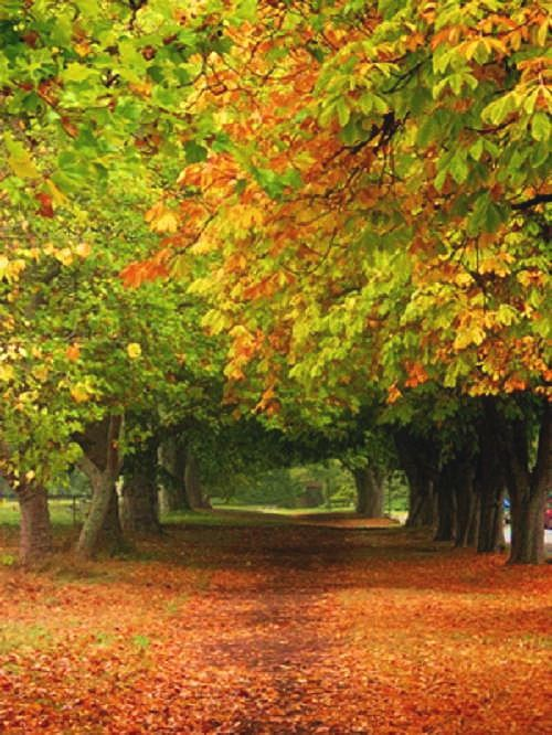 fall leaves: Autumn Roads, Fall Leaves, Fall Colors, Beautiful Trees, Autumn Therapy, Changing Colors, Beautiful Fall, Favorite Seasons, Autumn Colors