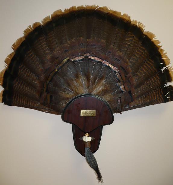 12 Best Images About Turkey Fan Mounts On Pinterest