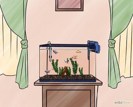 Set up a Freshwater Aquarium Step 11.jpg