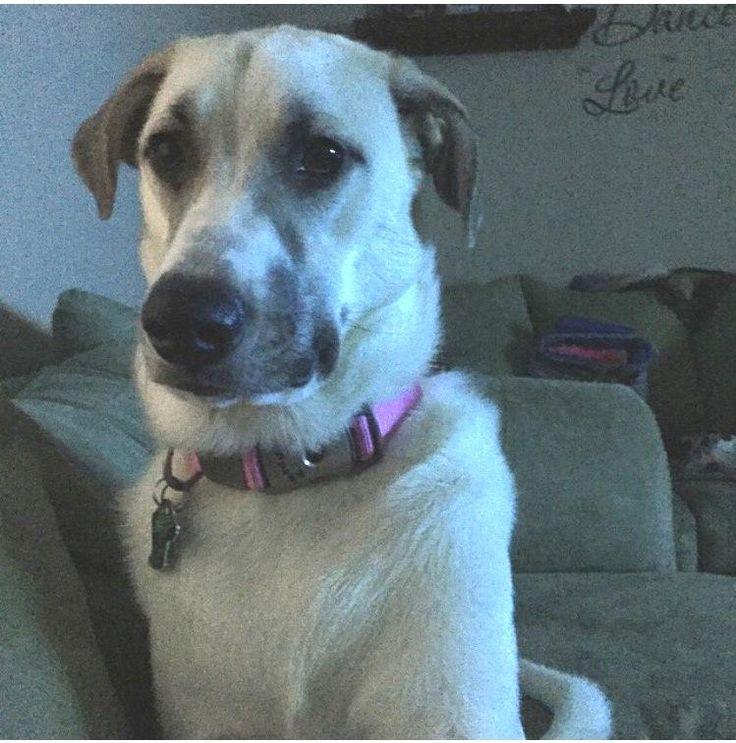 Dog Training Lima Ohio