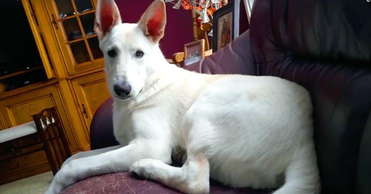 Hond reageert op eigen scheet - Dat koppie - Te grappig