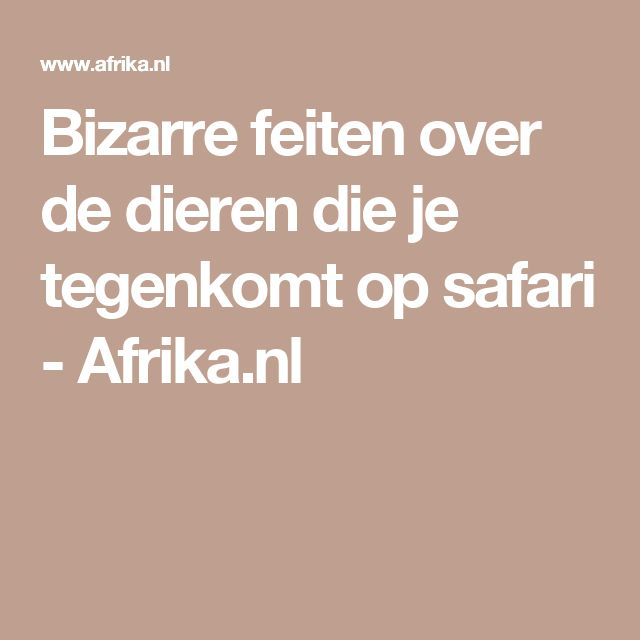 Bizarre feiten over de dieren die je tegenkomt op safari - Afrika.nl