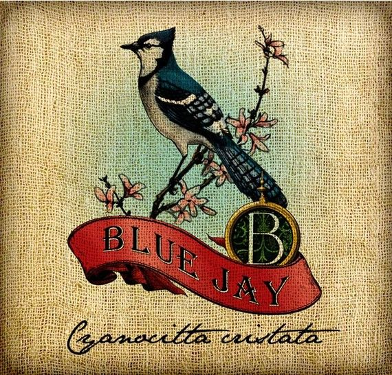 Blue Jay Scroll Monogram Hand Colored and Tinted by GadgetSponge, $4.99