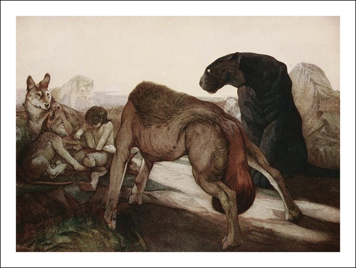 1000+ images about Book Illustration on Pinterest | The jungle book ...
