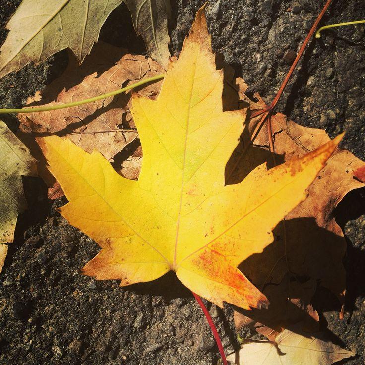 Pretty yellow leaf