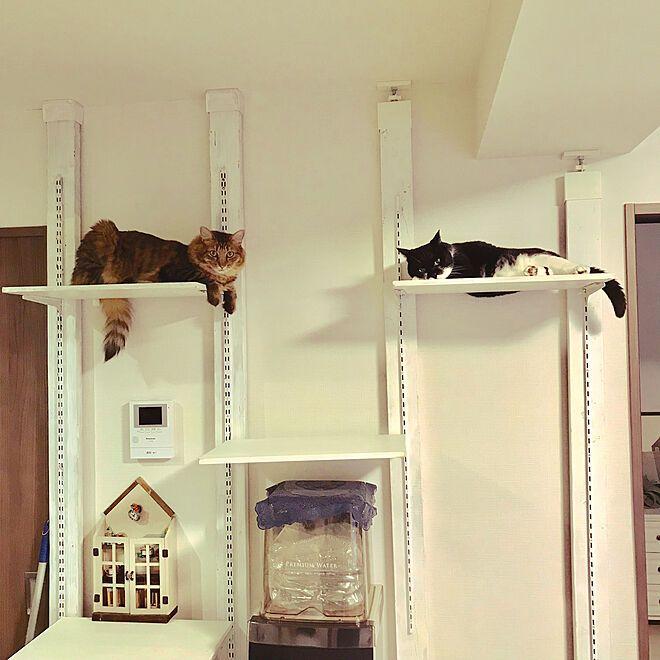 2 4材でdiy ラブリコ ディアウォール キャットタワーdiy 猫と暮らすマンション などのインテリア実例 2019 10 23 18 32 14 Roomclip ルームクリップ キャットタワー Diy キャットタワー インテリア