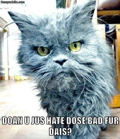 DOAN U JUS HATE DOSE BAD FUR DAIS? http://cheezburger.com/9022418688