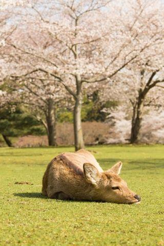 のんびりぶらり春の奈良旅行へ出かけませんか