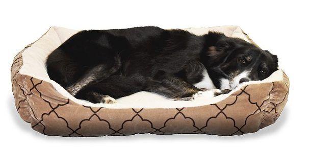 Durchfall Und Darmparasiten Naturlich Bekampfen Grosse Hundebetten Coole Hundebetten Orthopadisches Hundebett