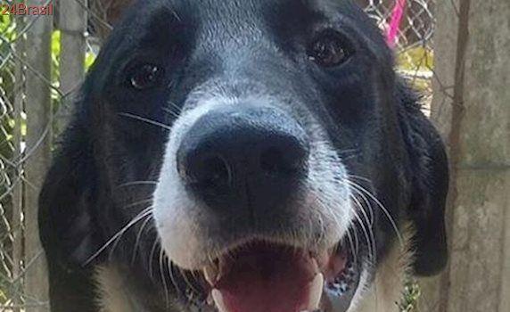 Lindo cachorro é encontrado na Rodovia Raposo Tavares, em SP