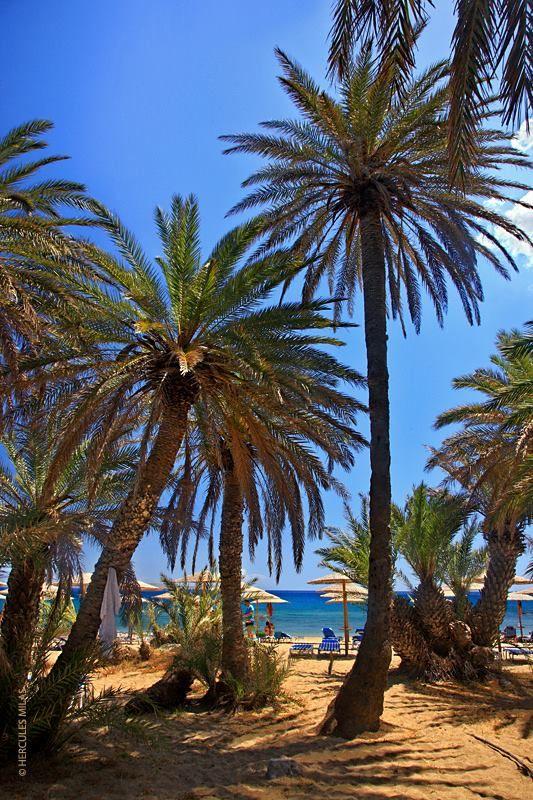 Vai palm beach, Lasithi, Crete