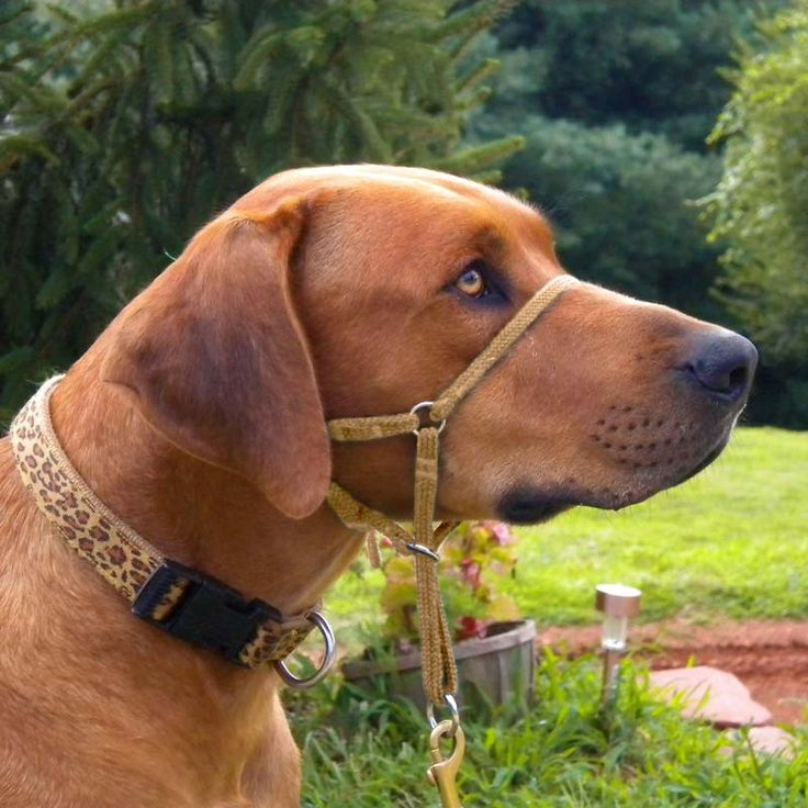 $ 28.75  Comfort Trainer Head Halter, Stop Dog Pulling!
