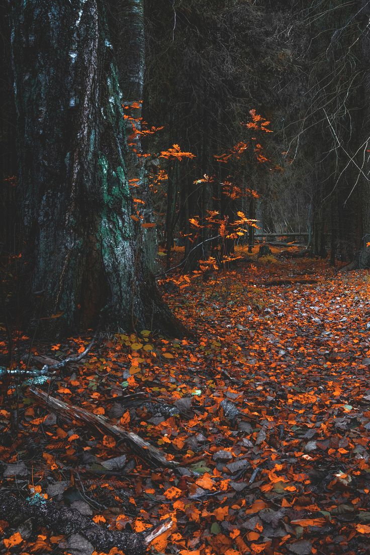 From the book where you might see the beautiful autumn leaves - In The Forest