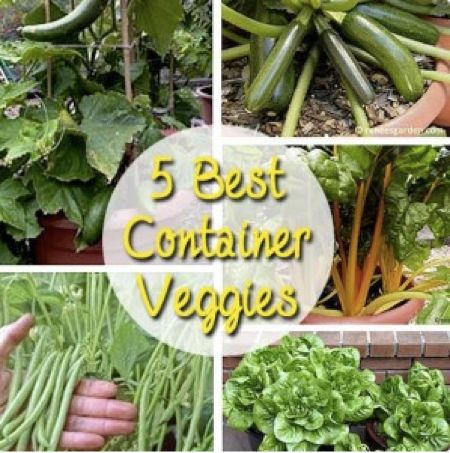 The 5 Best Outdoor Container Vegetables...http://homestead-and-survival.com/the-5-best-outdoor-container-vegetables/