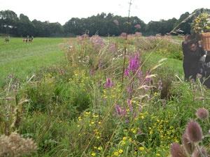 Ontwerp Natuurbegraafplaats voor Natuurmonumenten, door Vollmer & Partners