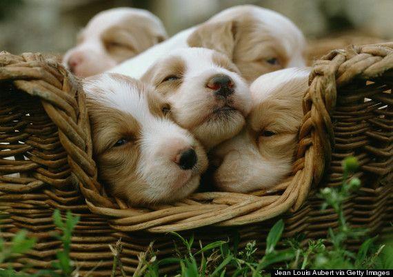 o-cute-dog-570.jpg