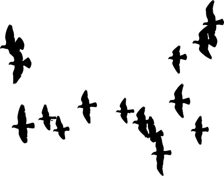 Flok, Duer, Fugle, Dyr, Vinger, Flyvning, Flyvende