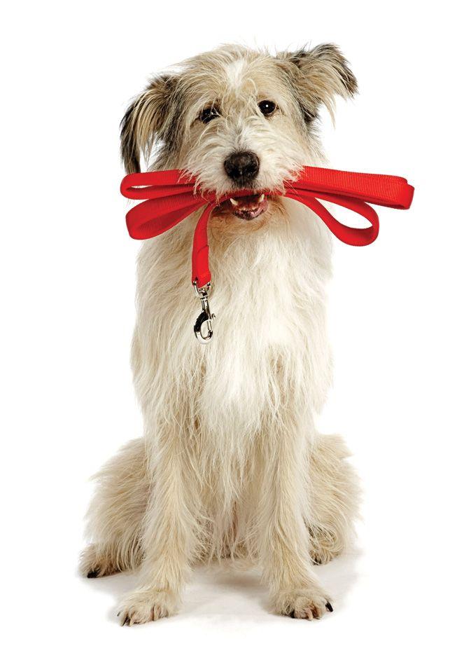 Best 25 Dog Walking Services Ideas On Pinterest Puppy