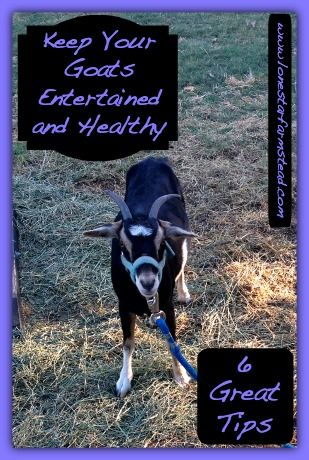 These great tips will help you keep your goats entertained and healthy. Healthy goats are happy goats and happy goats are productive goats..