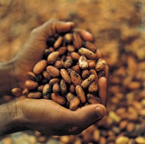 Verse cacaobonen