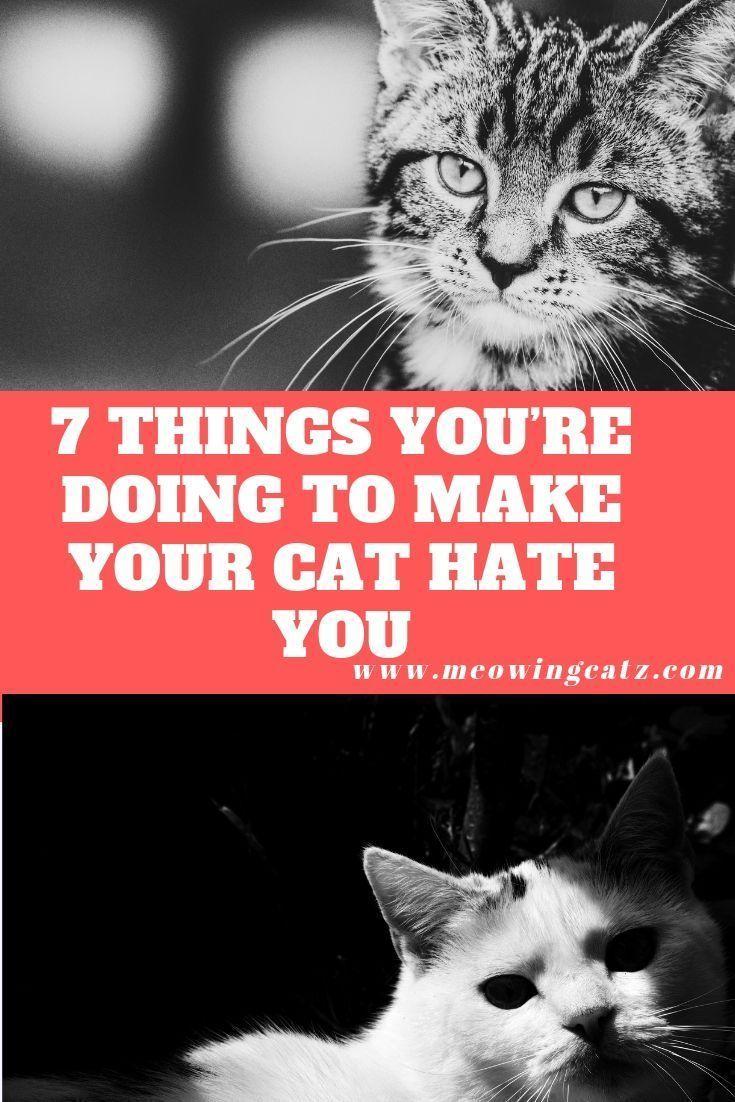 e07bd08aa77a822f9900f5d1ff2590e4 - How Do You Get Your Cat To Like You