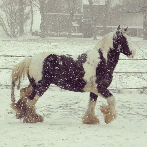 Bit Blog: Glijdend achter mijn paard