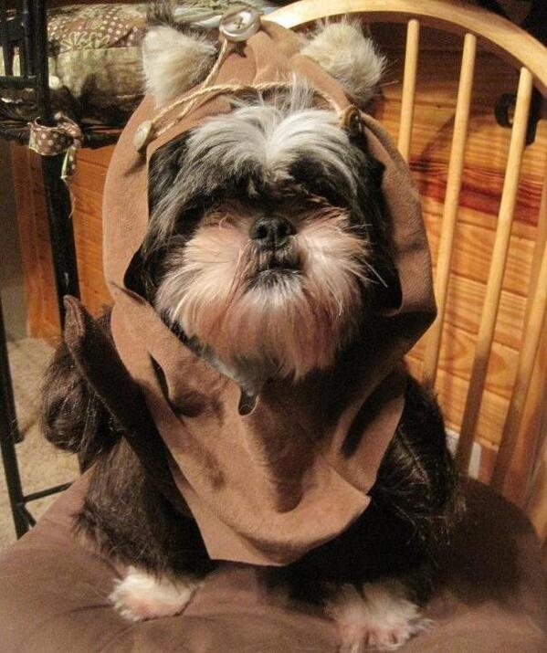 ewok dog star wars ewok dog costumedog halloween