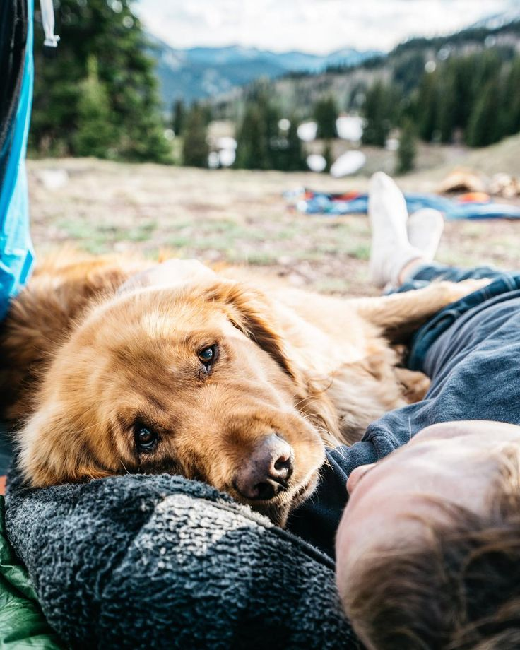 Aspen The Mountain Pup On Instagram Getting Those Tent Snuggles
