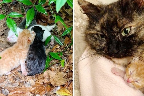 Stray Cat Shields Her Kittens From Pouring Rain Until Rescuers Arrive Kittens Stray Cat Cats