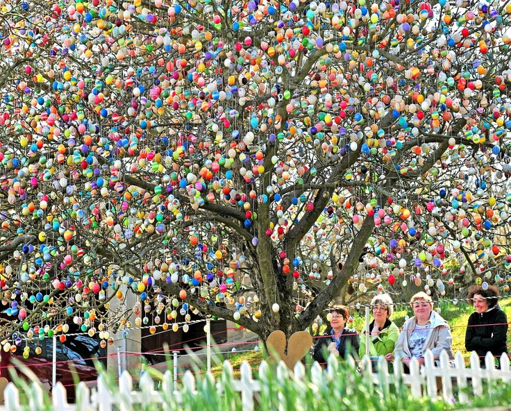 Mr. Volker Kraft has decoraded his Apple tree with Easter Eggs in the Eastern part of Germany, Saalfeld since 1965.