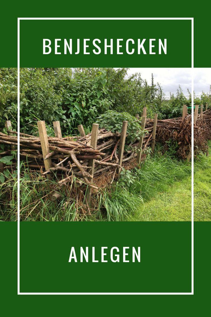 Benjeshecke Schutz Land Tiere Welche An Solchen Hecken Anliegen Hecke Pflanzen Pflanzen Naturgarten