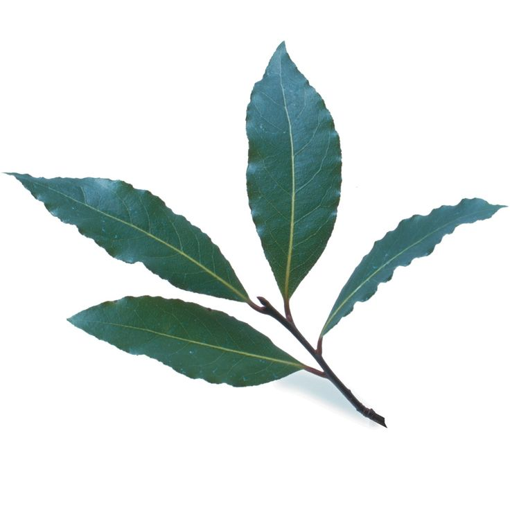 Bay leaves may be used more often than any other herb. A leaf or two gets added to to soups and stews almost as a matter of course and then removed after its flowery and spicy bouquet has been lent to the dish.