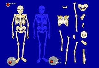 The Skeletal System Online Activities                                                                                                                                                                                 More