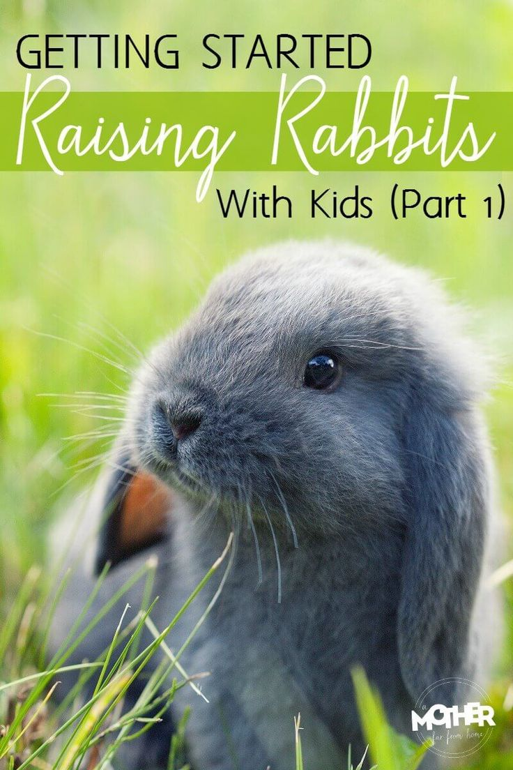Have you wanted to raise rabbits with your kids as pets? Or maybe have rabbits as a pet to help teach your children responsibility? Here are some tips to help get started raising rabbits with kids.