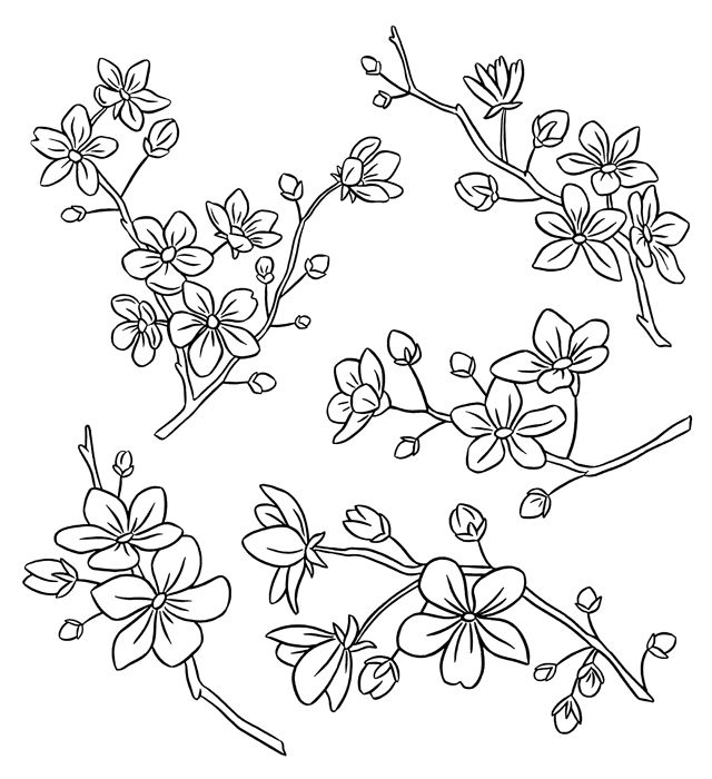 Cherry blossoms line art illustration (and potential wallpaper). #illustration
